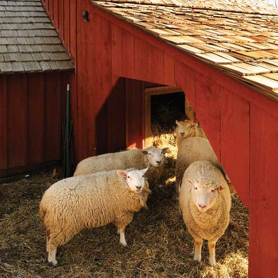 Animal Welfare: Tips for Successful Livestock Farming - Animals - GRIT Magazine