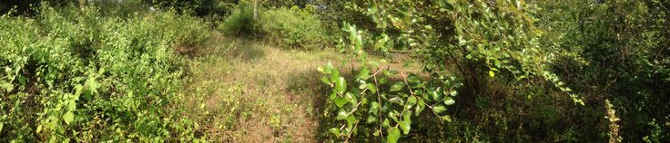 .̷ Residential Plot For Sale .̷ Location: Madhurawada, Visakhapatnam .̷ One Bore water facility to be Electrification .̷ Total Area : 306 sq yards  .̷ Facing : East .̷ Price: Rs.35,000/- Per Sq yard