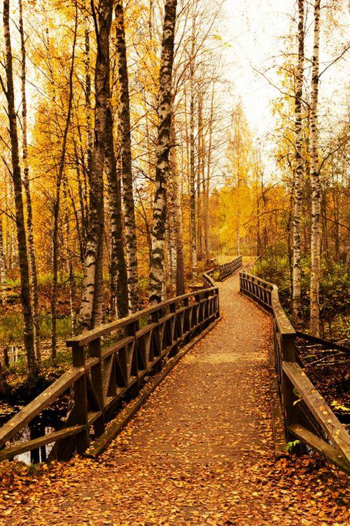 Autumn Bridge, Finland