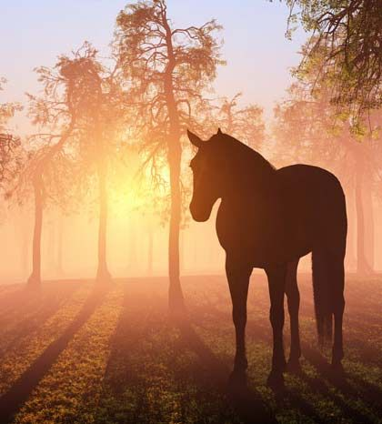 Caballos a collection of animals and pets ideas to try - Paisajes de australia ...