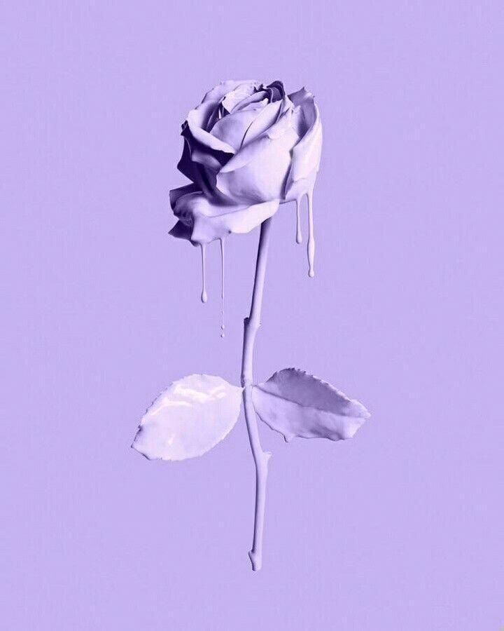 Lavender Melting Rose Iphonewallpaper Purple Wallpaper Iphone Purple Aesthetic Light Purple Wallpaper