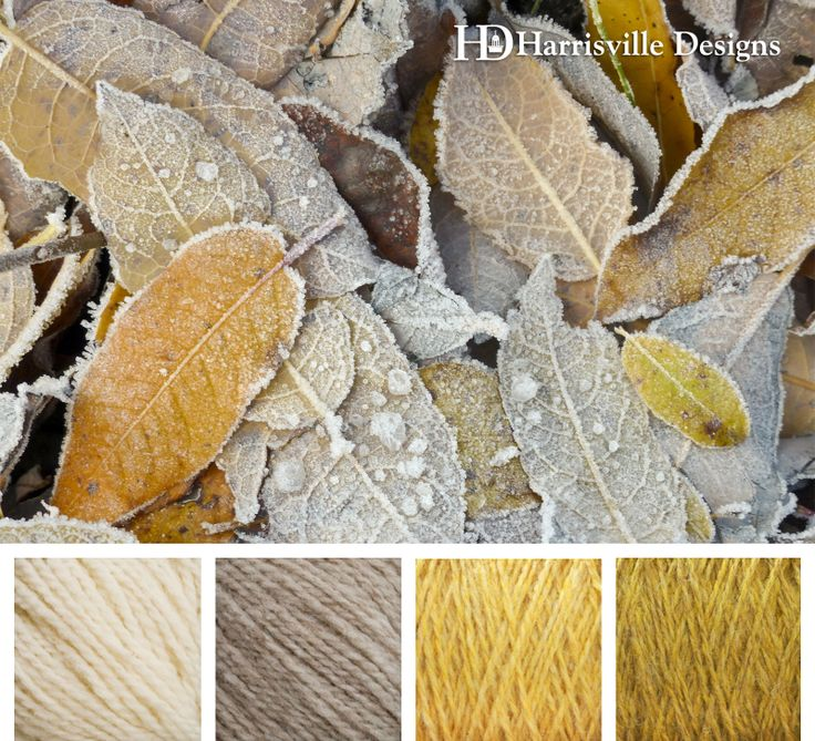 Frosted leaves color palette with golden yellows, silvery gray, and cream. Harrisville Designs yarn: White, Suede, Cornsilk, and Straw.
