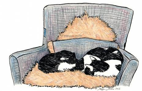 Cats Snoozing In Chair