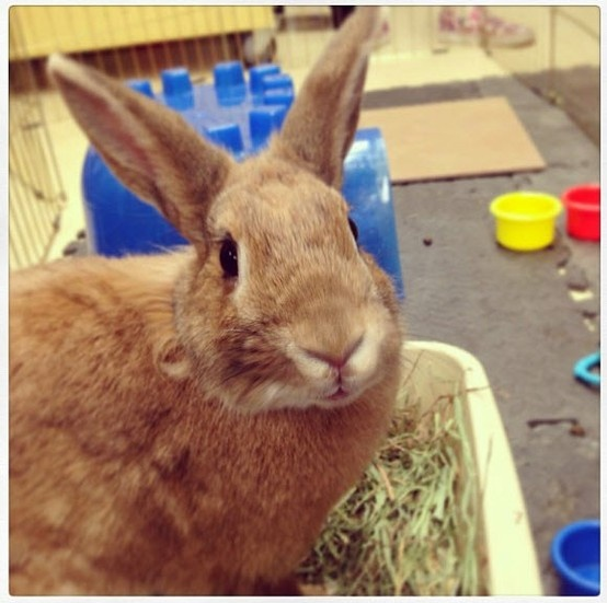 Rabbits are fun, clever and silly, and make wonderful first pets. Check out when the next rabbit adoption event is happening at your local store: www.petco.com/adoptions