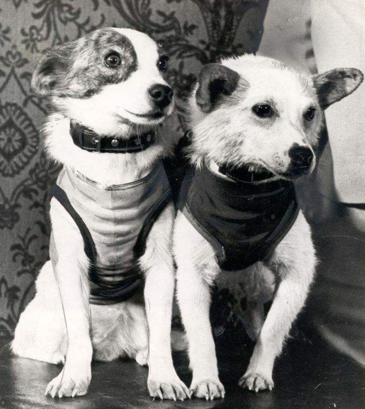 TODAY IN HISTORY: Belka and Strelka, pride of the Soviet Union, became the first dogs to fly in space and return safely to Earth, August 19, 1960.