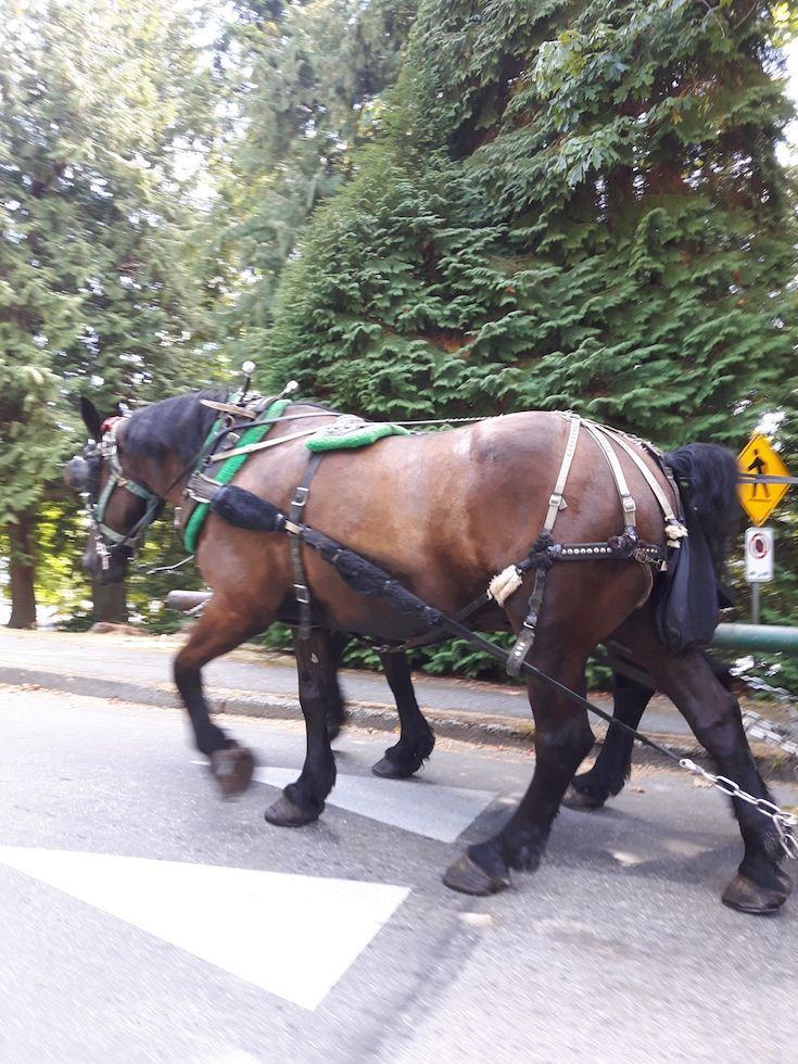 Horse drawn wagon rides in Stanley Park
