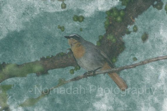 Bird photo with painterly watercolor effect.