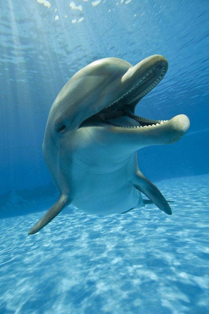 Happy Dolphin :) via Craig Holmes - flickr