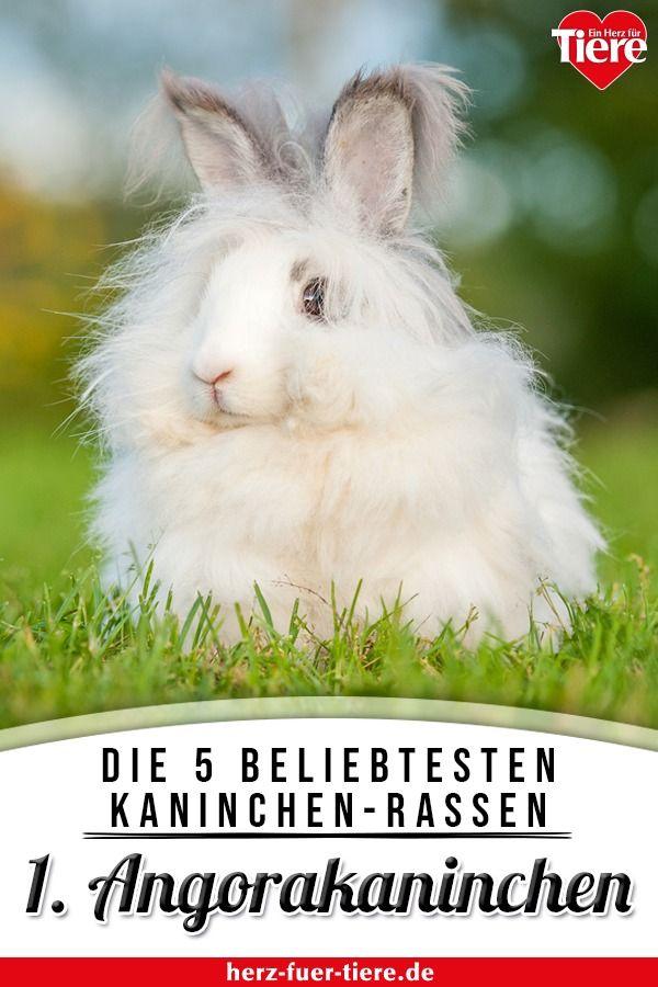 Top 5 Der Beliebtesten Kaninchenrassen In Kurzportraits Ein Herz Fur Tiere Kaninchenrassen Kaninchen Angorakaninchen
