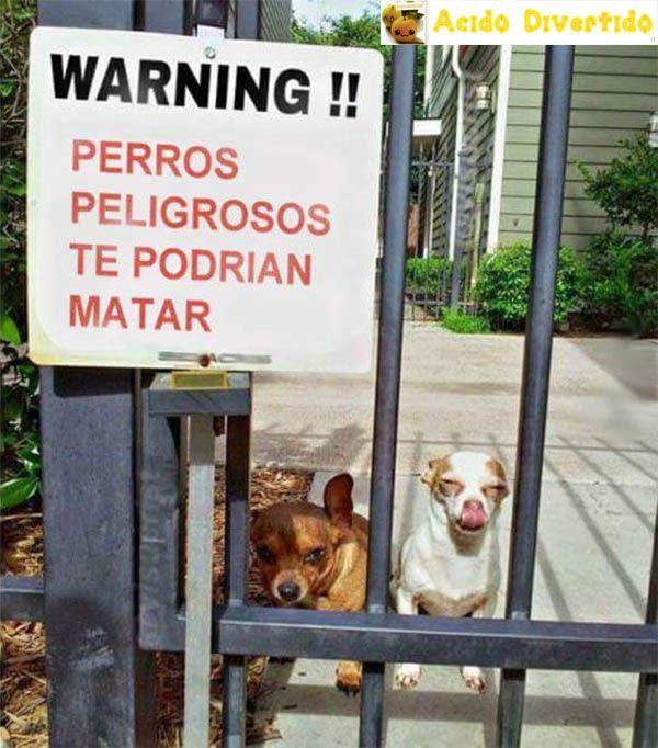¡Cuidado! ¡Perros peligrosos!