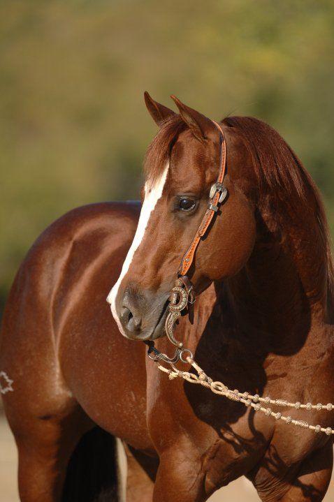 Hickory Chic Olena  (Smart Chic Olena x SR Hickory Lynn (by Docs Hickory)  1991 Sorrel AQHA Stallion