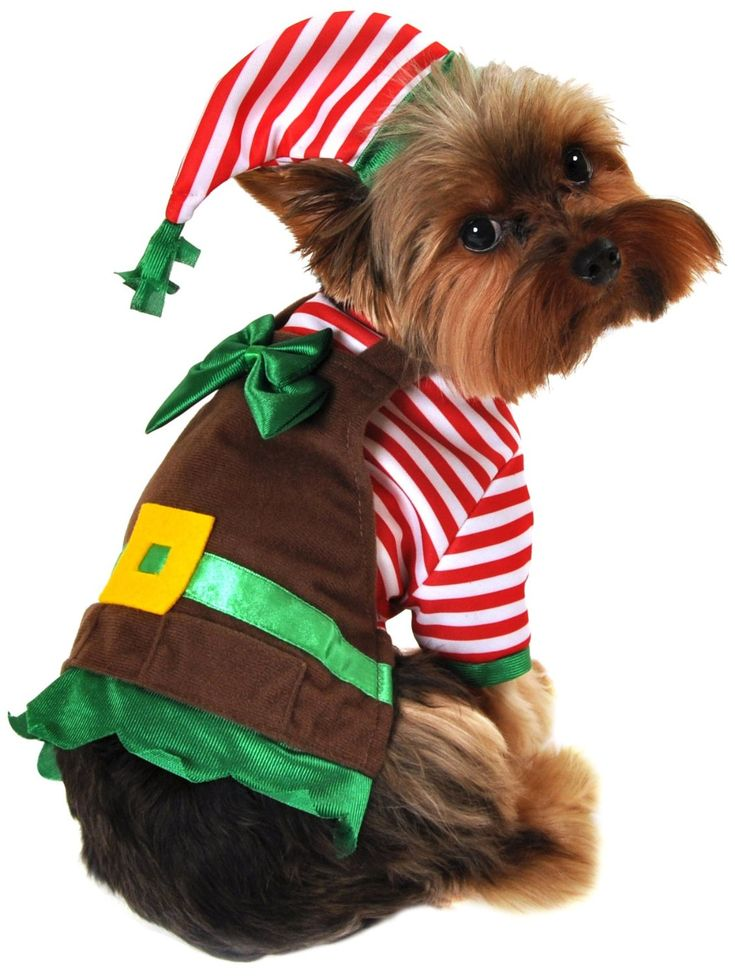 How cute are these Dog Christmas Costumes?