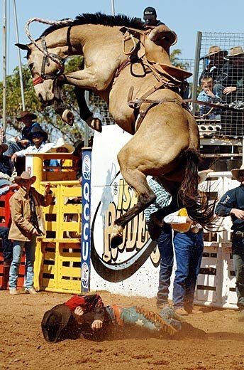 From Equine News Today....gives new meaning to Get Off My Back!..ima gonna buck ya then ima gonna stomp ya!