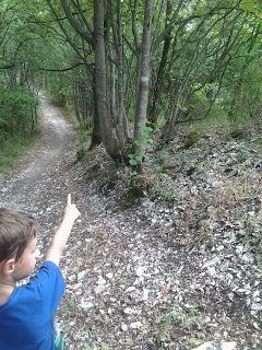 Alla scoperta dei segnali nel bosco
