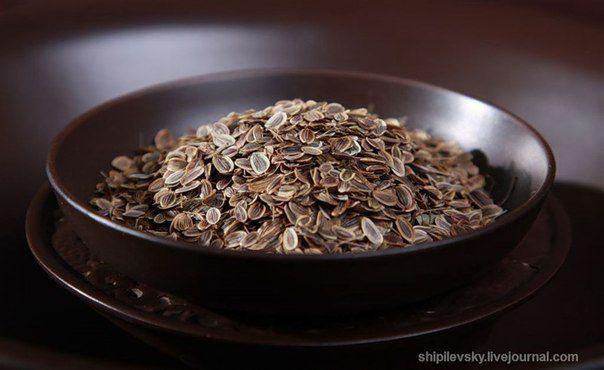 Очищение сосудов семенами укропа.   Советы Народной Мудрости   здоровье