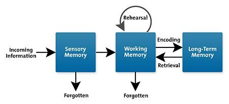 Information Processing Model (how we learn) - Richard Atkinson and Richard Shiffrin's cognitive load theory, 1968.