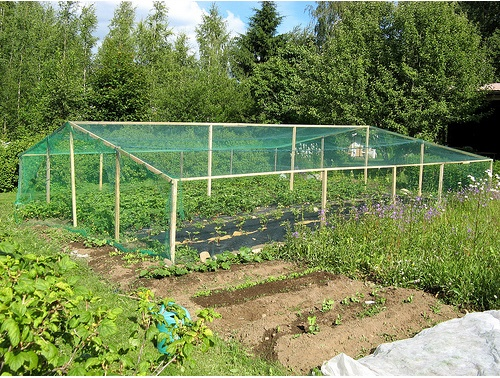 deer and bird proof fencing with house frame and netting