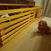 Lounge,DIY,ゲージ,犬のいる暮らしに関連する他の写真