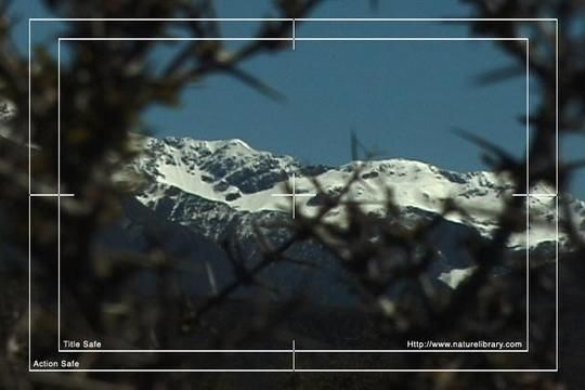 Royalty Free Stock Footage : New Zealand : NL00594