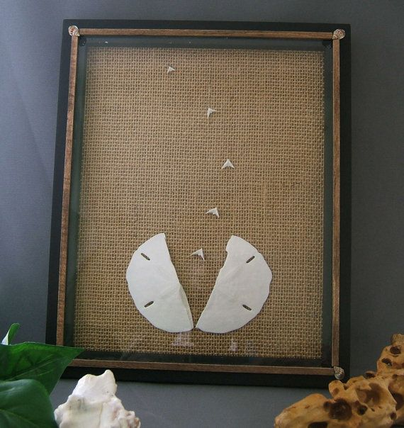 Sand Dollar Dove Picture Beach Decor from by CraftyShells on Etsy, $35.00