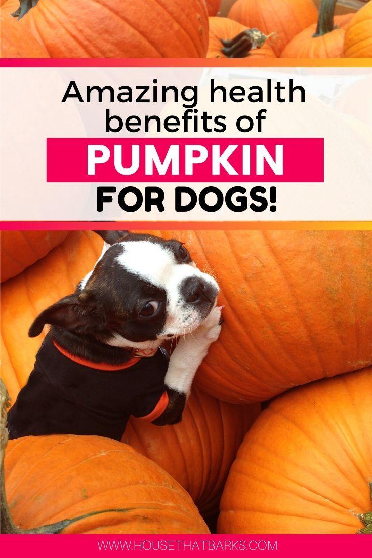 does pumpkin help a dog's upset stomach