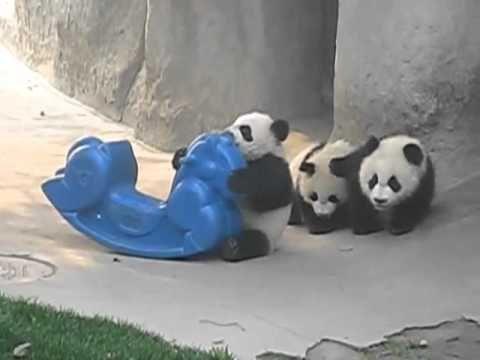 Pandas Bebes