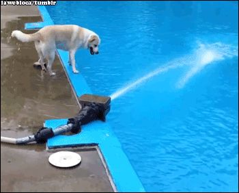 """This dog who actually had the thought, """"Oh, let me just go catch this stream of water."""" 
