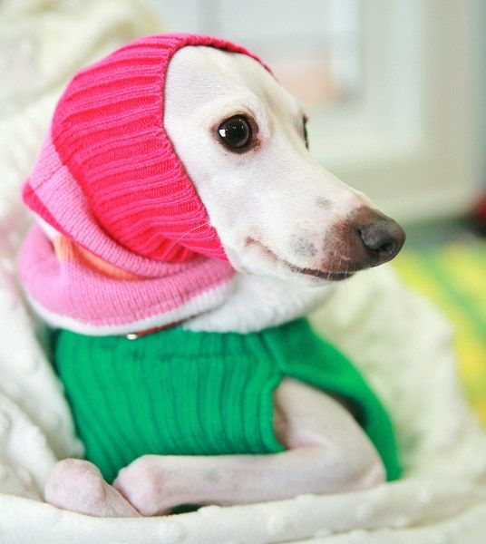 10 Best Dog Coats for Winter [DIY Projects]