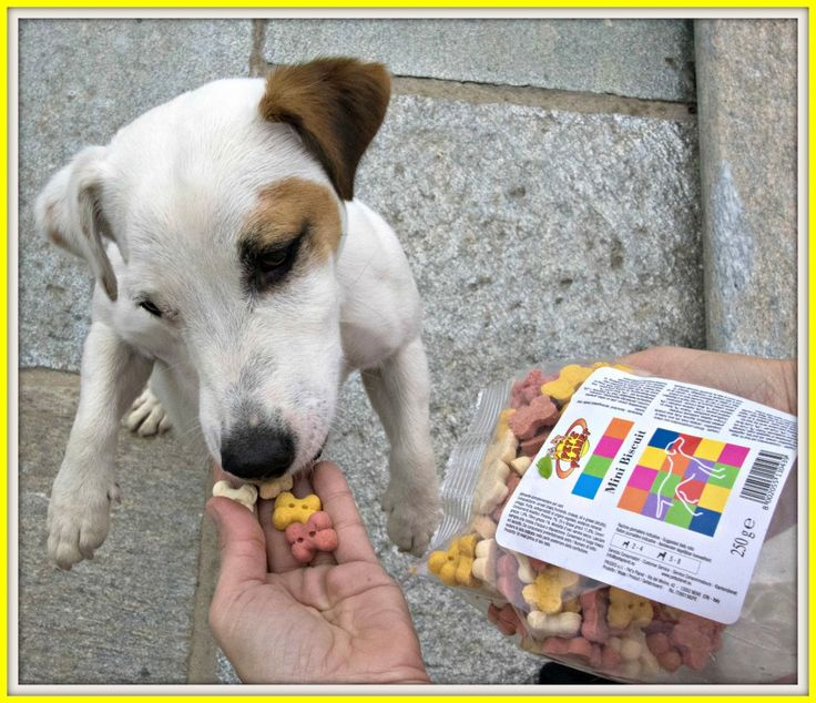 #jackrussel #cane #dog #dogs #petfood #petsplanet #food #alimentazione #pet #pets