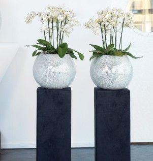 die besten 25 orchideen im glas ideen auf pinterest topf orchidee mitteldekoration orchideen. Black Bedroom Furniture Sets. Home Design Ideas