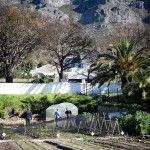 Could a greenhouse have a more beautiful setting?  Oranjezicht City Farm, Cape Town, South Africa. http://urbanfreedom.co.za/2013/08/ozcf-installation-greenhouse-envy/