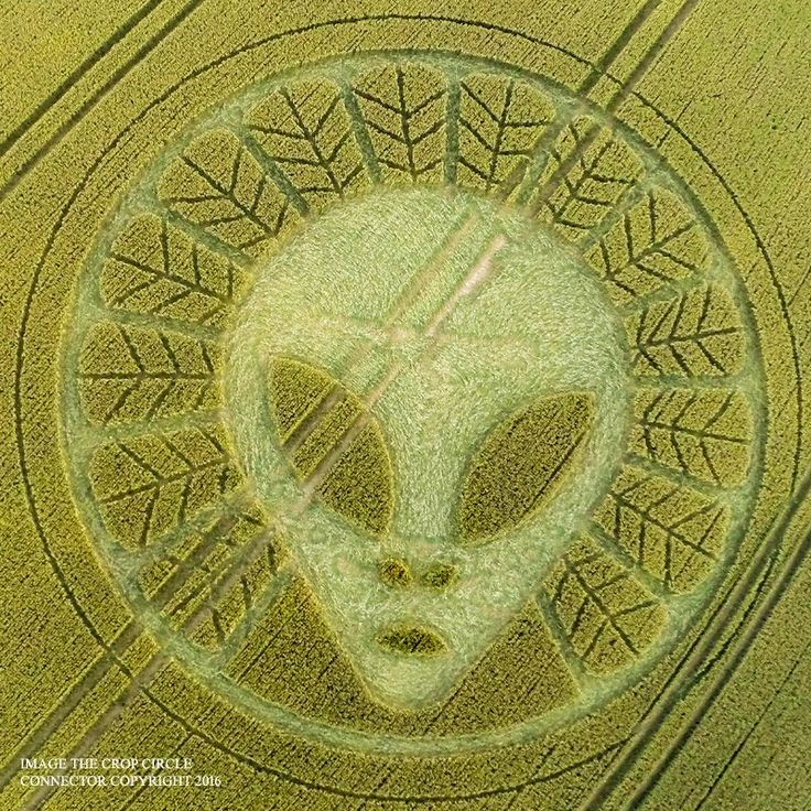 Crop Circles 2016 - Reigate Hill, Reigate, Surrey, UK - 19th July 2016 -...