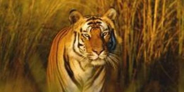 Enforce Laws in India That Bans Citizens From Bengal Tiger Habitats http://www.thepetitionsite.com/takeaction/206/991/574/