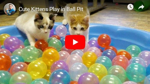 Funny Cats Videos Image By Kittens Oh Kittens Kittens Cutest