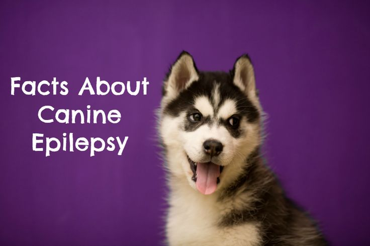 Facts About Canine Epilepsy on Purple Day