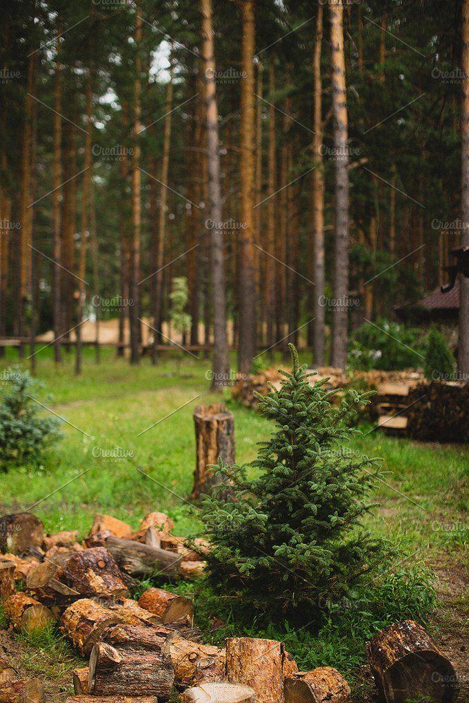 Forest by NataliaGubinaPhotography on @creativemarket