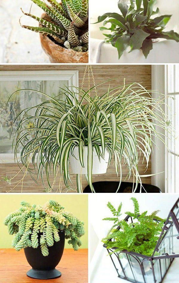 38 besten zimmerpflanzen bilder auf pinterest zimmerpflanzen g rtnern und landschaftsbau. Black Bedroom Furniture Sets. Home Design Ideas