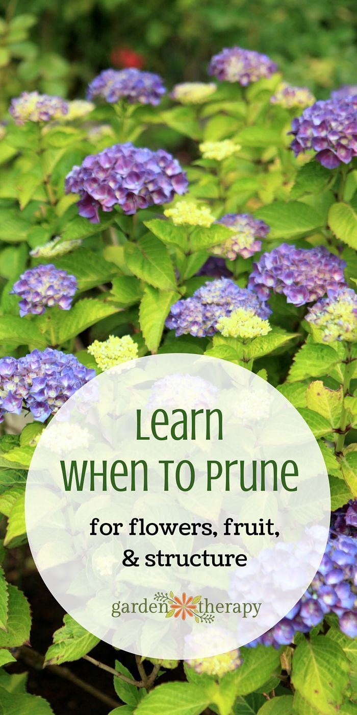 Learn When to Prune all the Plants in your Garden With this Helpful Guide
