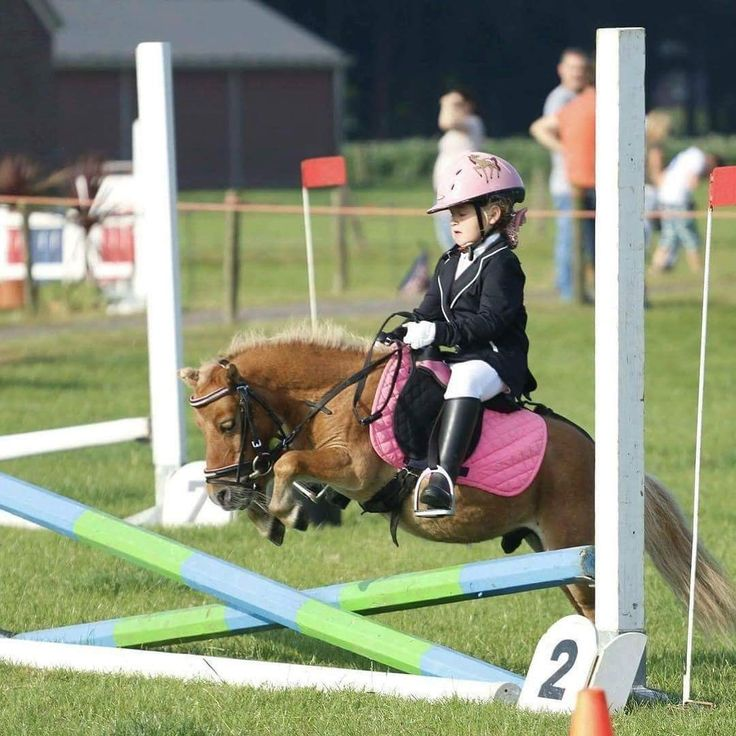 Mini Horse giving his all for his child over a jump. Just precious!