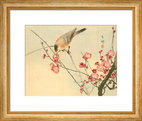 Prunus with White Eye by Anonymous Chinese Artist - art print from King