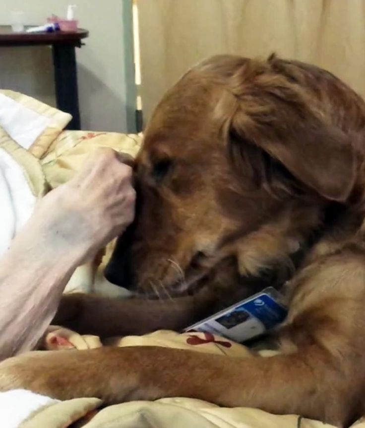 This therapy dog helps dying patients in a hospice know they are not alone. A remarkable story.