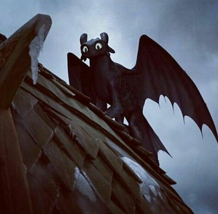 If you saw this on your roof would you scream , run or try to train ( this is not toothless I'm talking about but a random night fury)