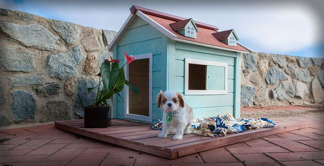 Chester relaxing on the deck of his RitzPetz dog house