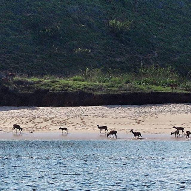 #labuanbajo #ntt #flores #indonesia #nature #savana #ocean #komodo #sea #igphotomagic #beauty_of_nature_ #bestnatureshots #uwphotography #uwpics