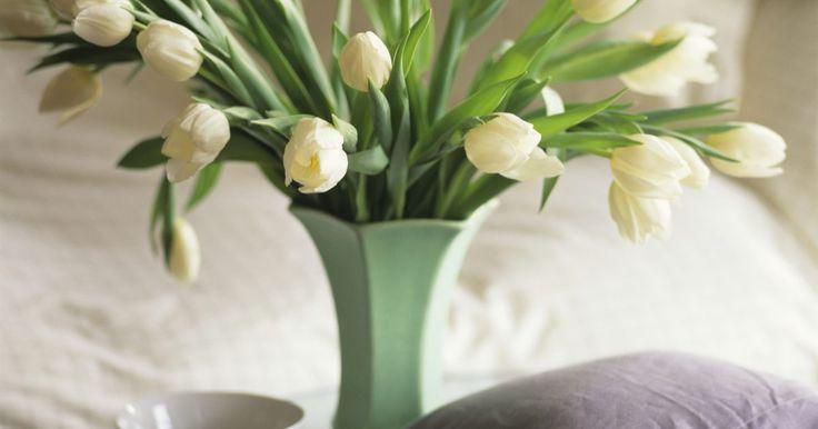 Cómo cuidar tulipanes en casa cuando ya han florecido. Los tulipanes son una de las primeras flores que florecen en primavera. Iluminan los jardines con su variedad de colores, incluyendo el rojo, amarillo y rosa. Tener tulipanes en tu casa también puede iluminar cualquier habitación con sus flores bellas y elegantes. Cuidar tus tulipanes en casa cuando ya han florecido es una tarea sencilla y ...