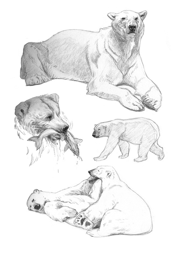 264 best Bear study images on Pinterest | Wild animals, Grizzly ...