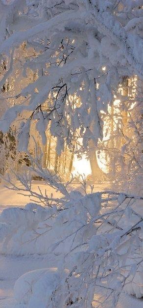 flowersgardenlove:  Lovely Beautiful   WINTER IS SO BEAUTIFUL