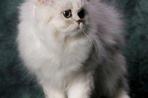 #dagenskatt Foto: Lillan Magnusson #fotolillan #cat #katt