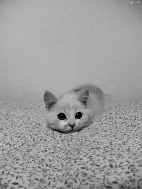 I'm (almost) invisible :)