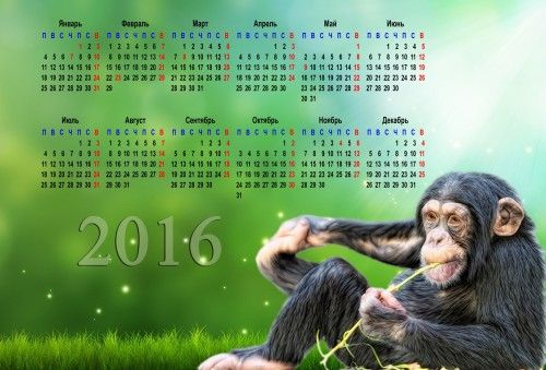 Обои Календарь, 2016, обезьяна на рабочий стол - картинки с раздела Креатив